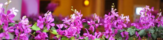 000_yau evenimente_yau flori_calipsa_ev companie la hotel phoenicia (5)
